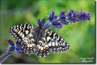 mariposas10-600x404